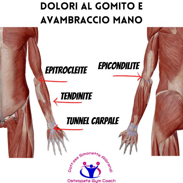 simonetta-alibrandi-osteopata-Dolori-al-gomito-e-avambraccio-tunnel carpale-epicondilite-epitrocleite-tendiniti