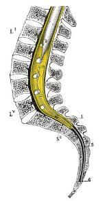 filum terminae osteopathe lille