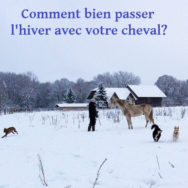 Chevaux hiver froid neige