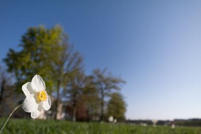 Das Prinzip der Blüte