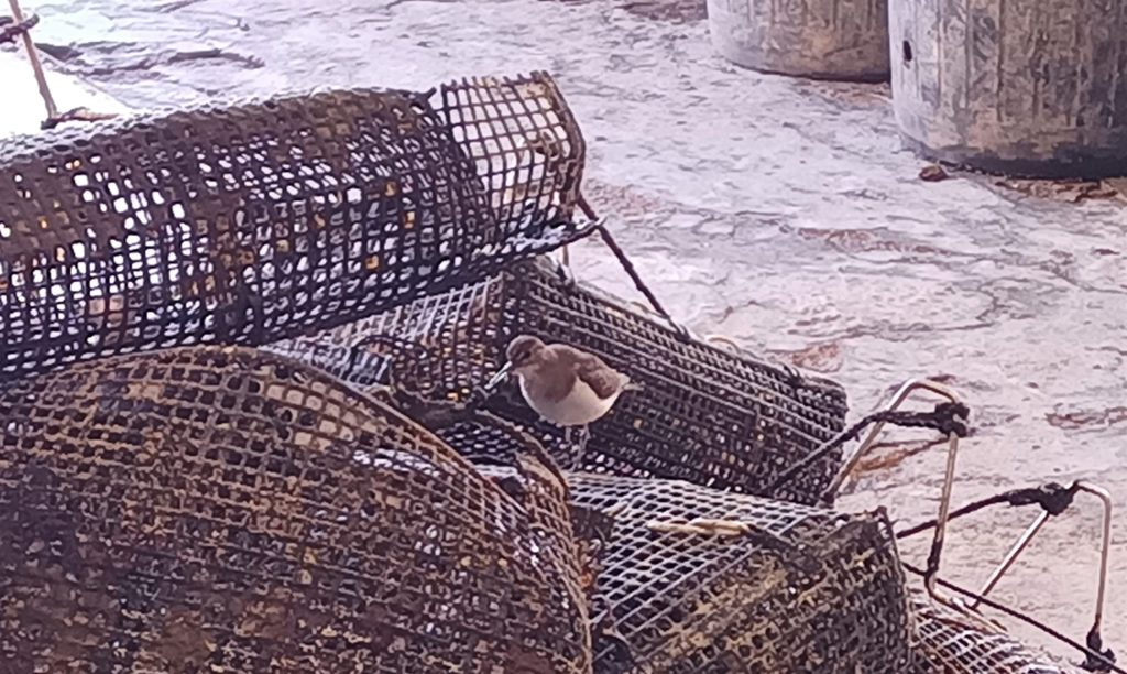 Oiseau affâmé Thau