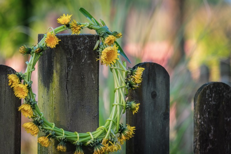 Dandelion wreath hanging on a wooden fence post.