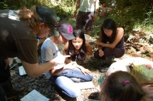 Students separate stream invertebrates into functional groups. Many thanks to Oregon Sea Grant's StreamWeb project for lending us stream sampling kits!