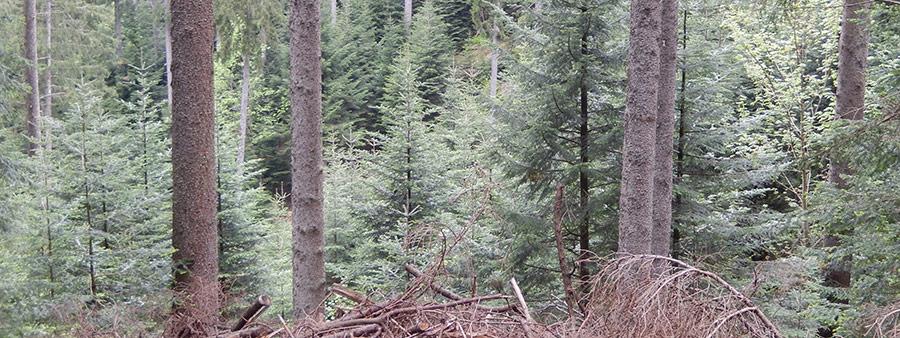 forest-regen