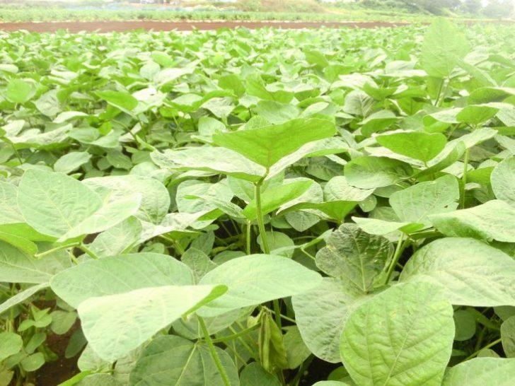 枝豆 保存方法 冷凍5