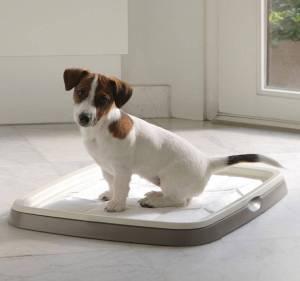 Как отучить собаку гадить и писать дома: щенка и взрослую | PetGuru