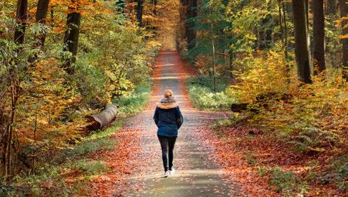 公園で散歩