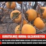 KURUTULMUŞ HURMA ÜRETİCİYE KAZANDIRIYOR