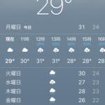 【薪の原木集め】土日の原木集めの作業が、雨ばかりでマジ困る・・・