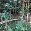 新しい原木回収の現場を紹介していただきました。