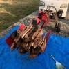 台風21号で倒れたモモの木を割る。