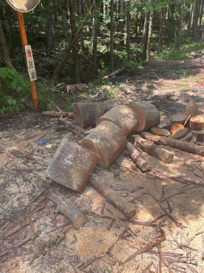 【原木の購入と玉切り】ヤマザクラを回収