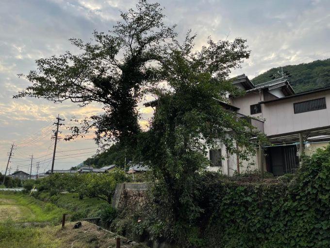 【ゆるーく伐採】続・桜を切る