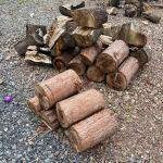 【ゆっくり作業】カシと杉の回収を続ける。