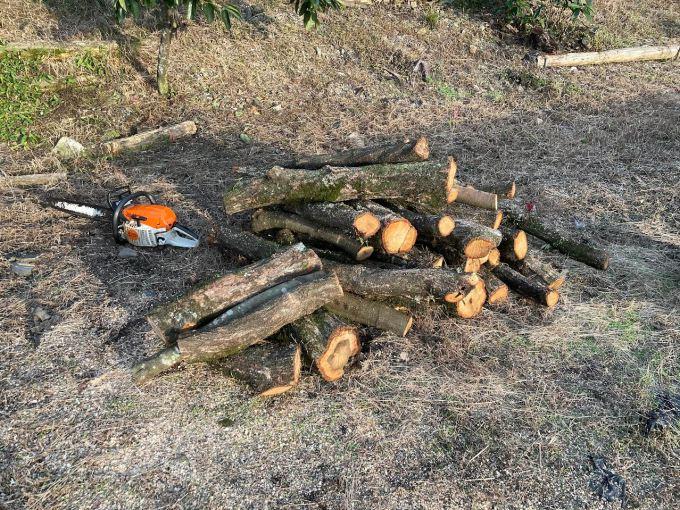 【玉切り】太めの枝を切って片付ける