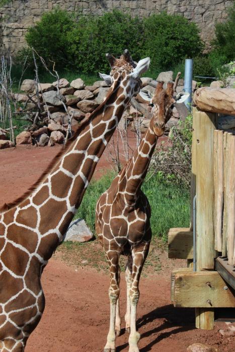Cheyenne Mountain Zoo 1a