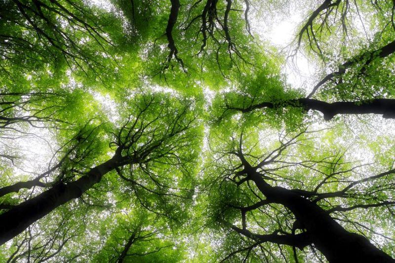 Avvena aide hoteliers mesurer reduire empreinte carbone API