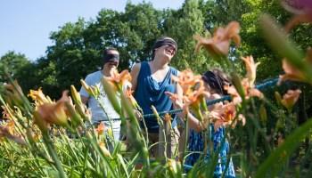 Jardins de Brocéliande - Photo : Anne-Cécile ESTEVE