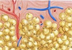 Efekt lipolizy i drenażu podczas zabiegu elektrostymulacji.
