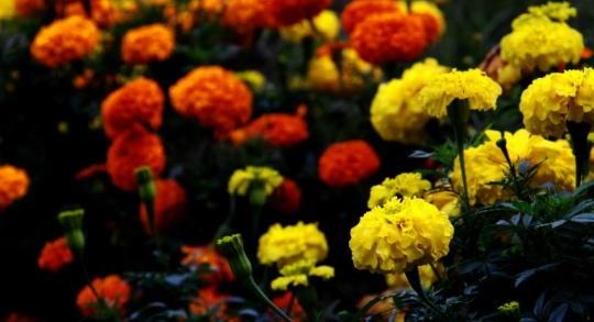 母の日にプレゼントする花は何色がいいのか