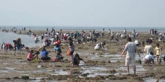 ゴールデンウィークに貝塚二色の浜潮干狩り場に行ってきました