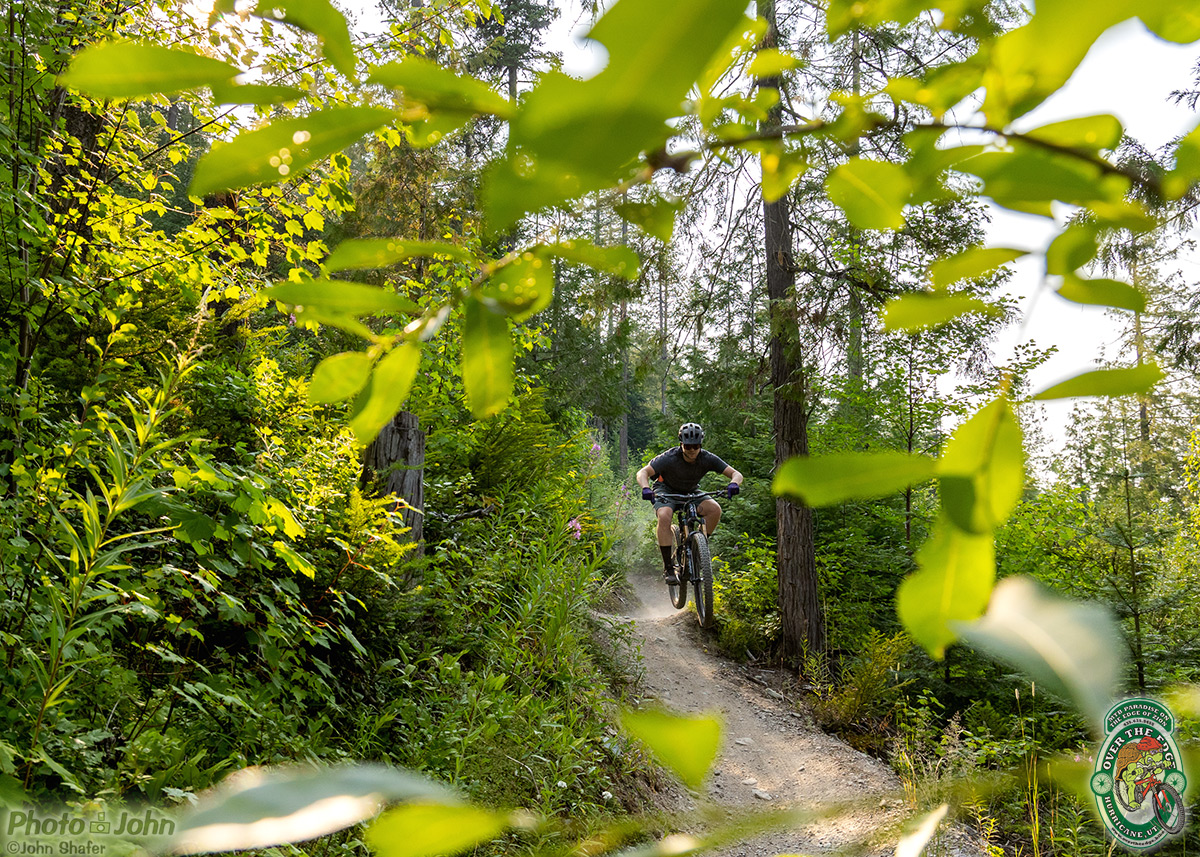 Mountain biker riding aggressively on singletrack trail in deep Montana forest.