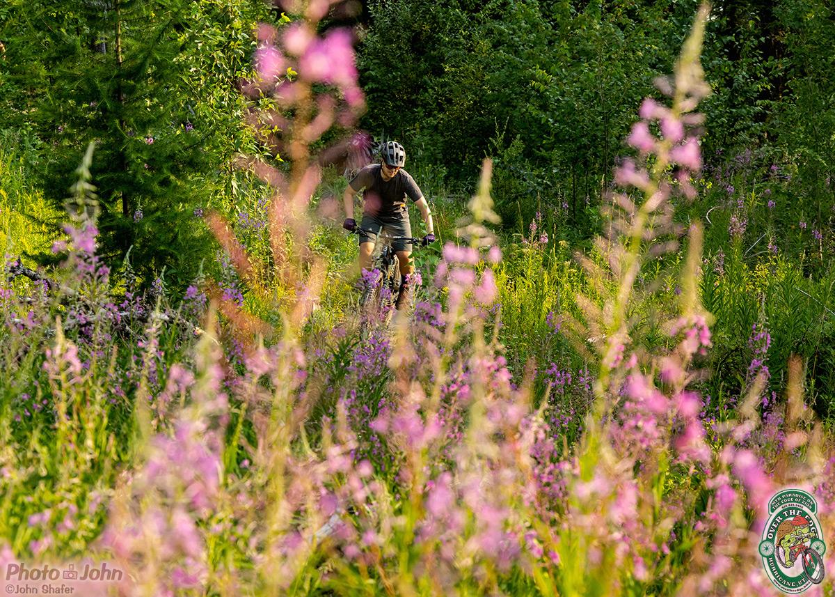 A mountain biker seen through blurred, purple fireweed wildflowers.