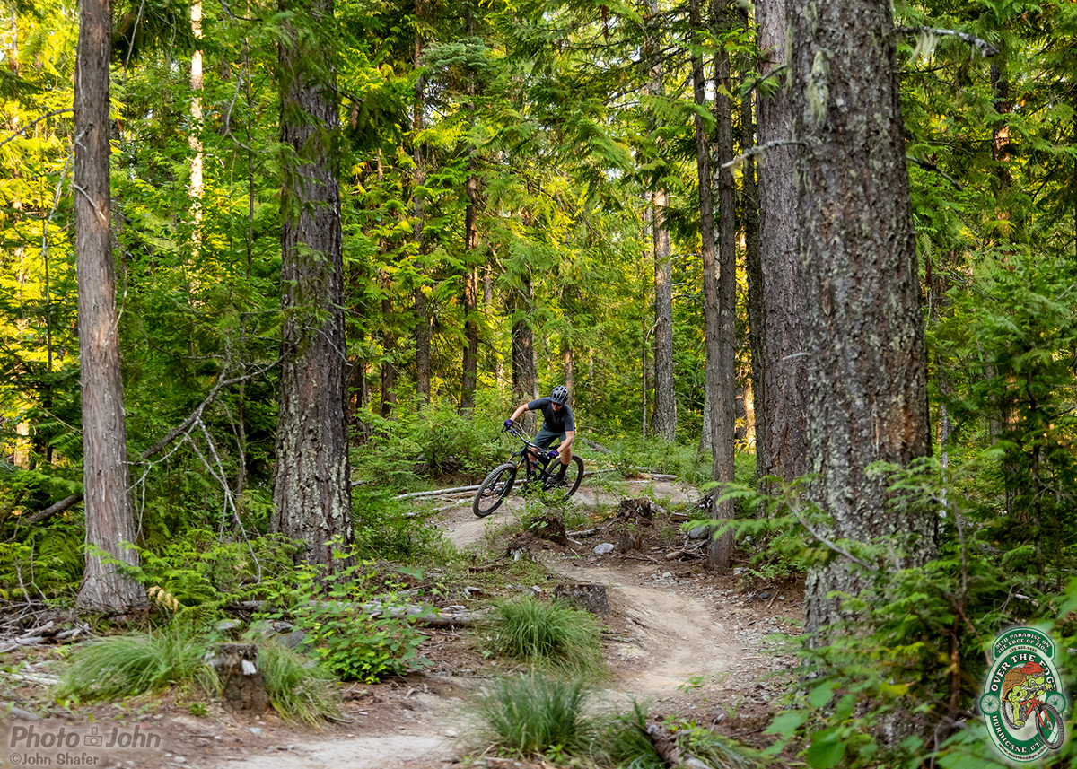 A small mountain biker riding curvy singletrack trail surrounded by large evergreen trees.