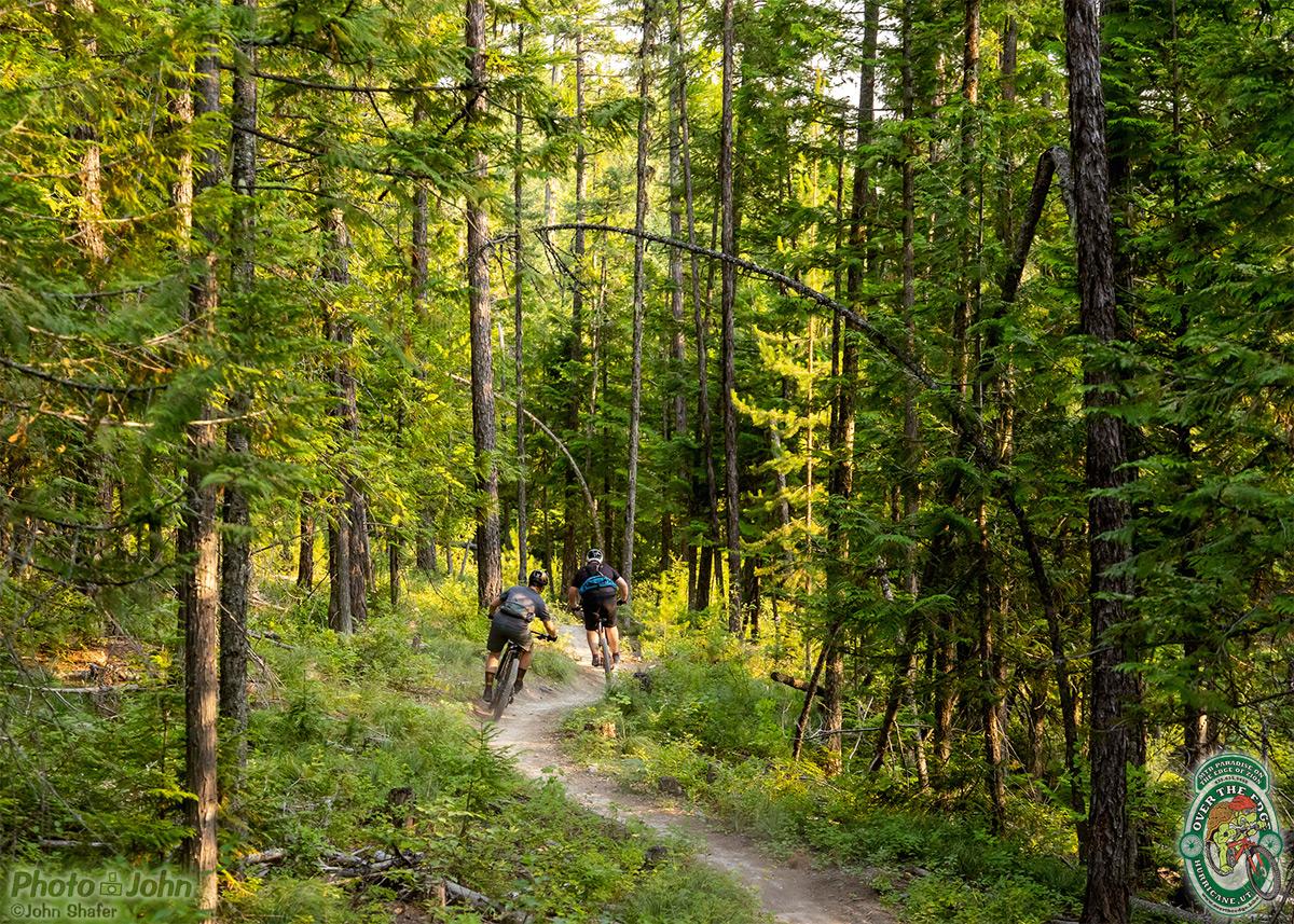 Two mountain bikers cornering on singletrack under big evergreen trees.