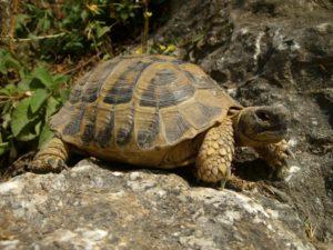 turtle-467263_1280-1024x768
