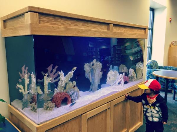 Algonquin Area Library Fish Tank