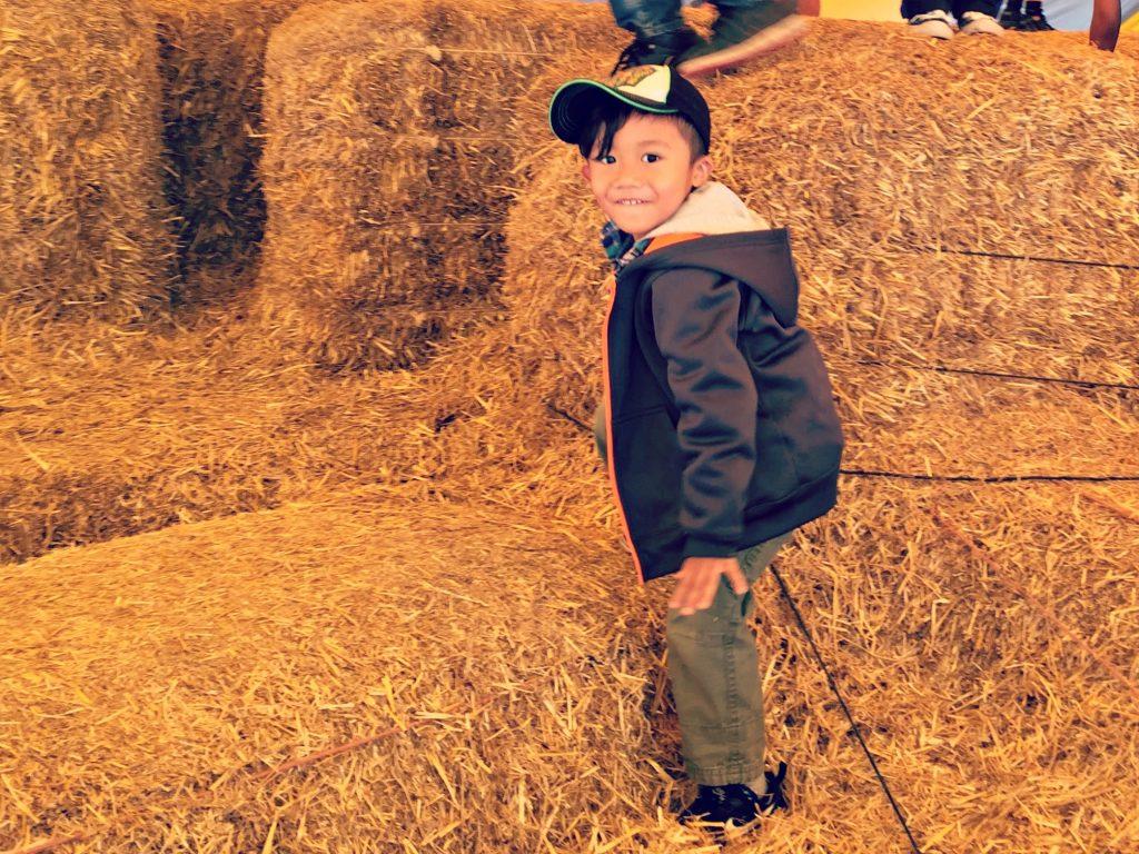 konows-corn-maze-hay