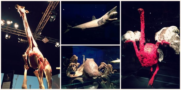 Milwaukee County Zoo - Body Worlds Animals Inside Out