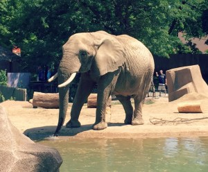 Milwaukee County Zoo - Elephant