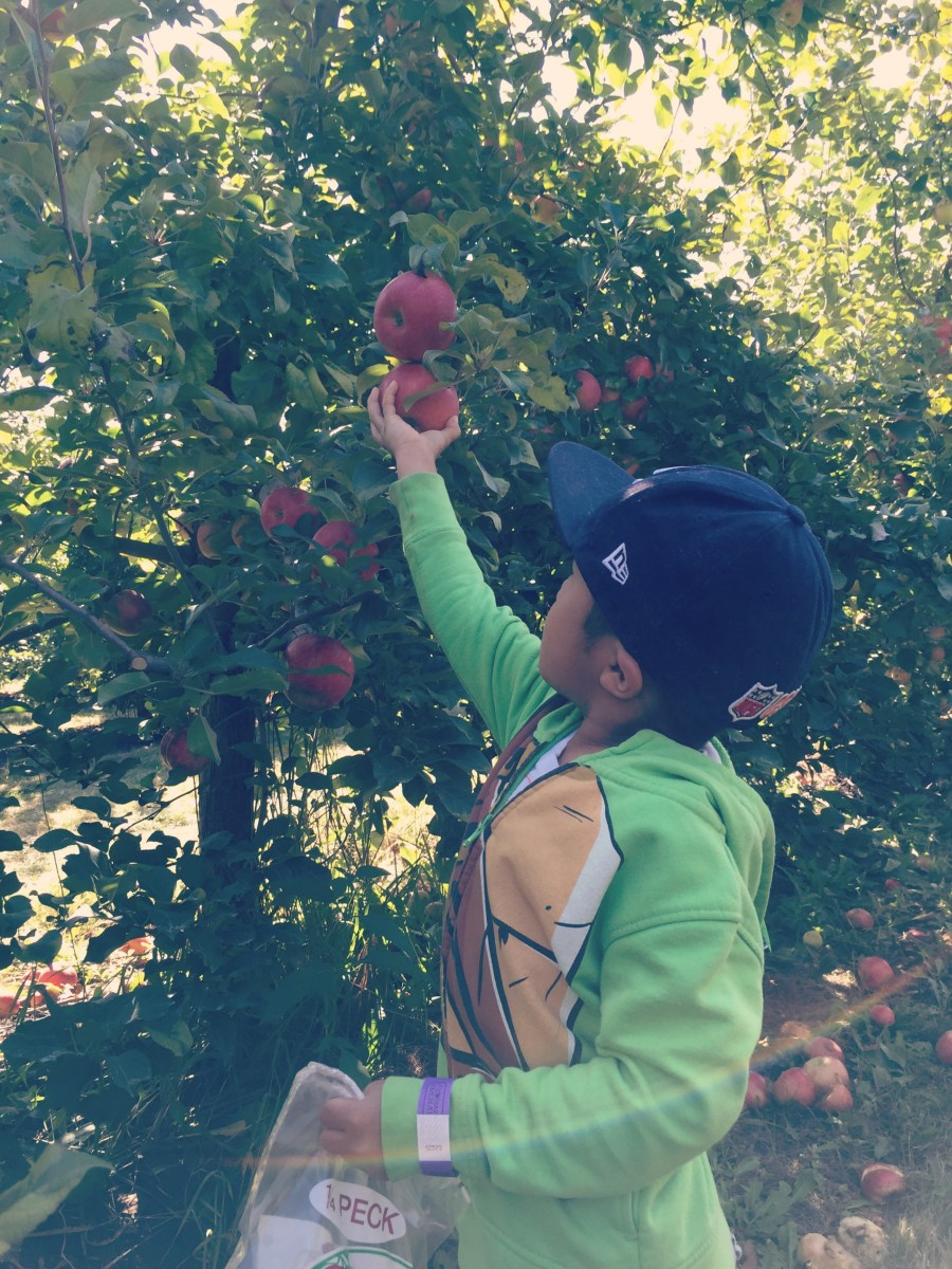 Family Fun Review: Apple picking, fall fun, and apple cider donuts at All Seasons Orchard