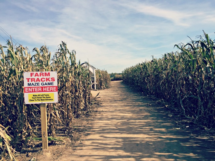 Fall fun at Richardson Adventure Farm, World's Largest Corn Maze