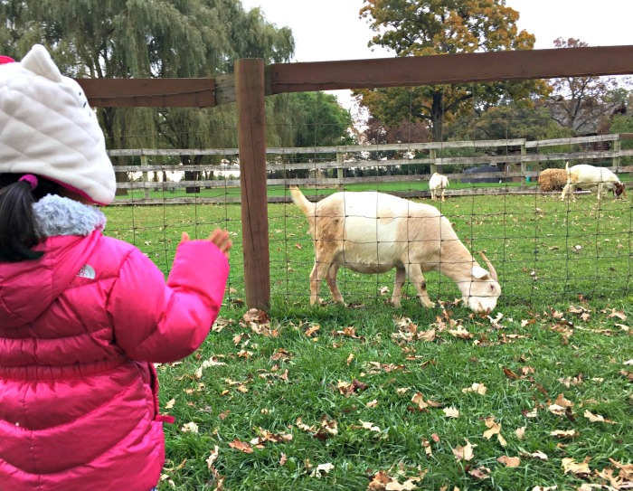 Fall family fun at Royal Oak Farm Orchard in Harvard, Illinois including the world's only apple maze, apple picking, and fun kids area.