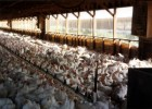 Hauter-Factory-Socially Responsible Agricultural Project