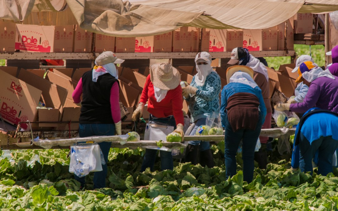 America's Farmworkers Face Poverty, Neglect, and Now Deportation