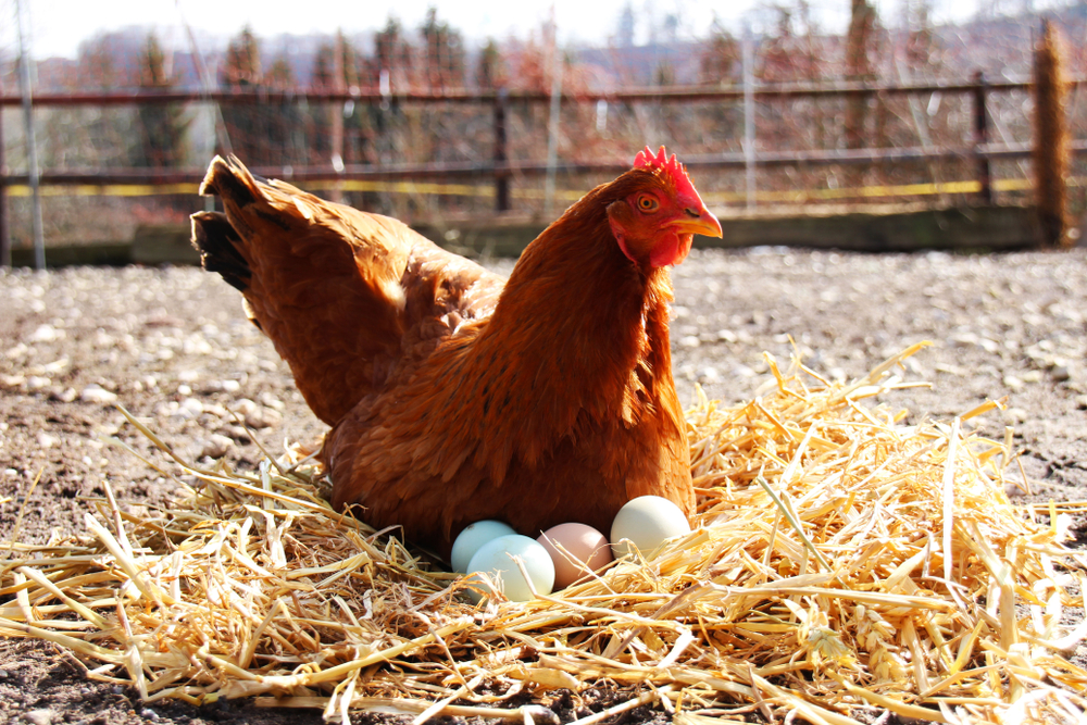 The Organic Food Industry Thrives on Regulation