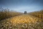 farm-country-rural-america-iowa-agriculture-corn