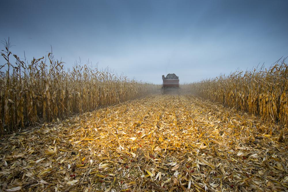 Just Who Got Trump's Farm Bailouts?