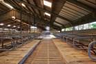 farmers-farm-bankruptcy-trade-wars-big-agriculture