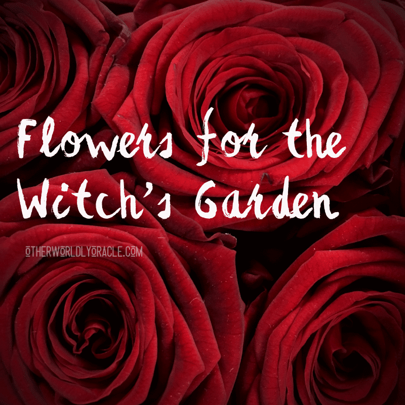 Flowers for the Witch's Garden