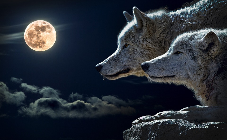 There are wolf gods and wolf goddesses from nearly every culture.