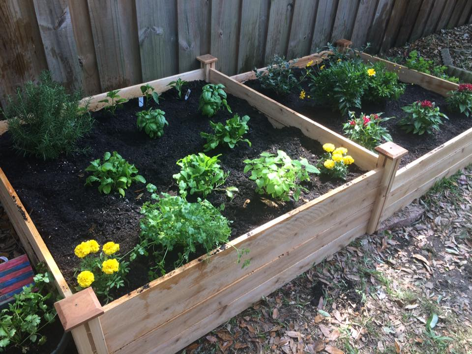 Grow your own herbs for cheap affordable witchcraft ingredients.