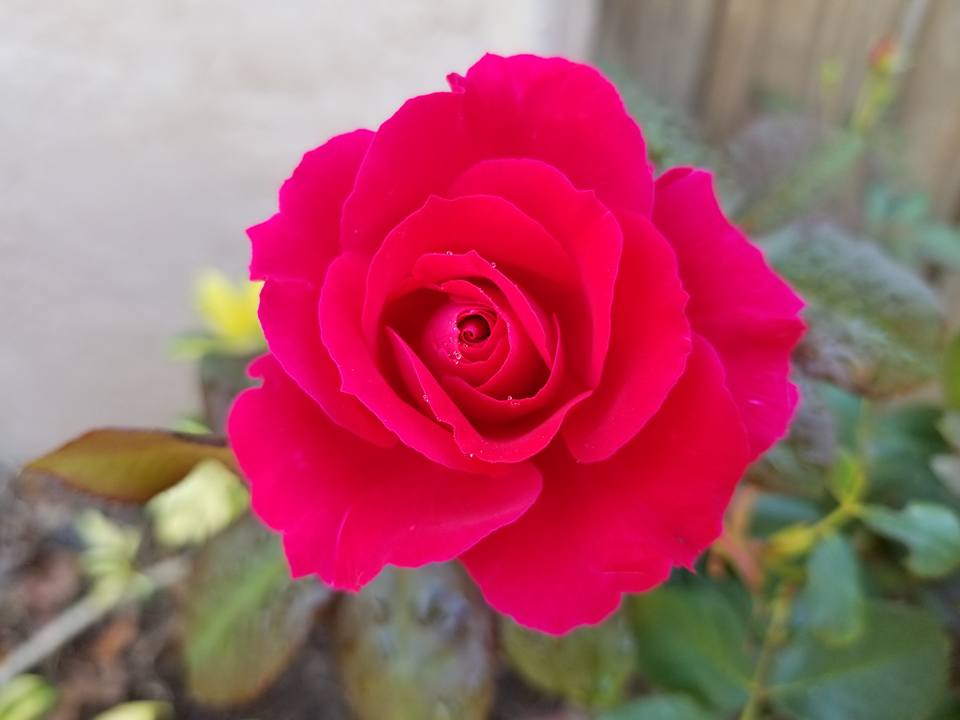 Rose is one that I grow in my garden and keep in my witch's herb cabinet.