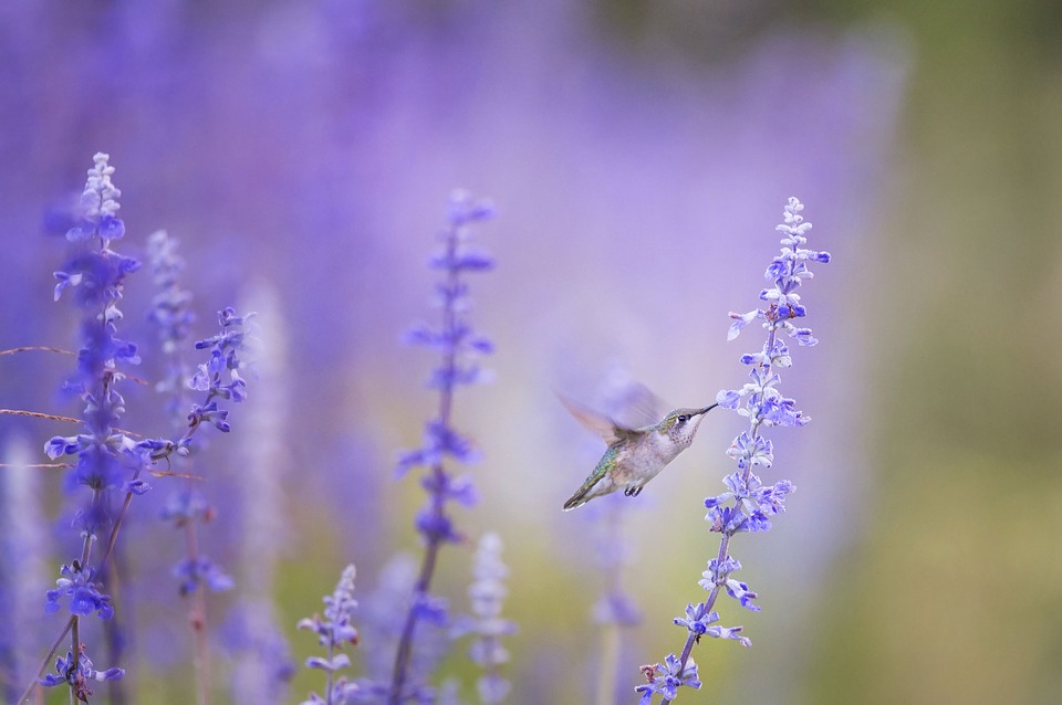 Hummingbirds bring messages of joy and love. These birds are always a good omen!