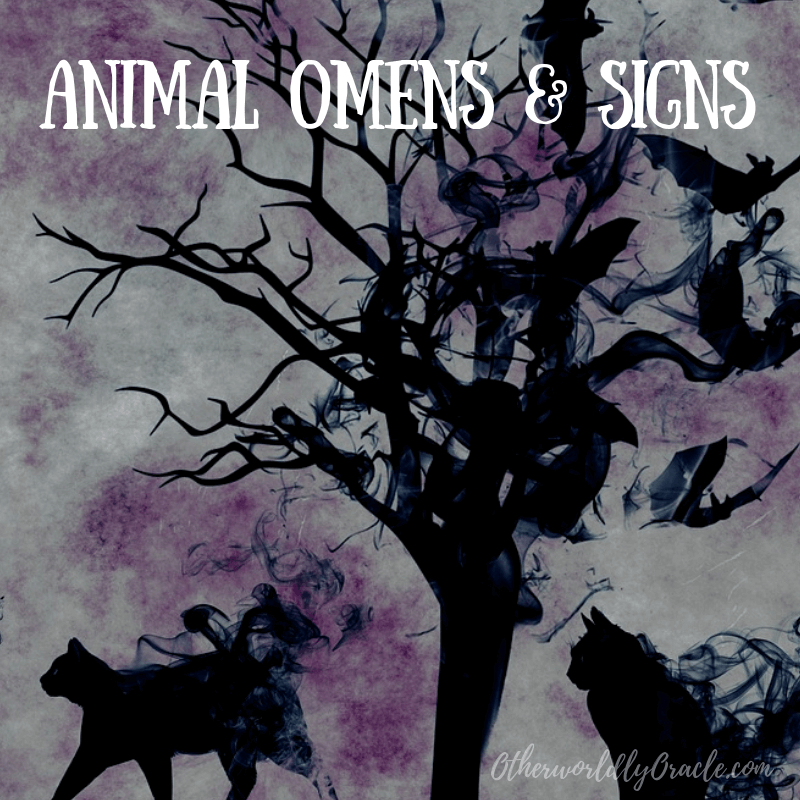 Animal Omens & Signs