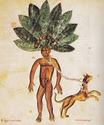 Mandrake Root: One of the witch's poisonous herbs
